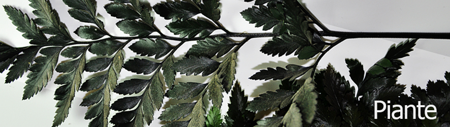 catalogo_piante